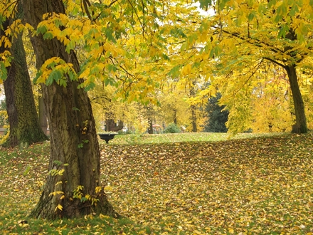 Which is your favourite tree for parks?